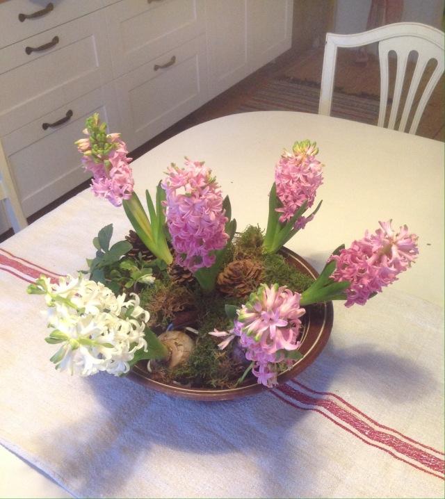 skål med hyacinter